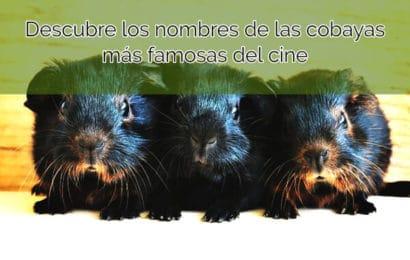 Descubre los nombres de las cobayas más famosas del cine