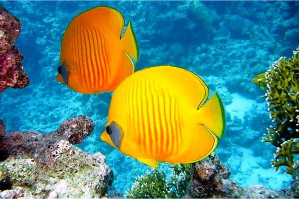 dos peces nadando