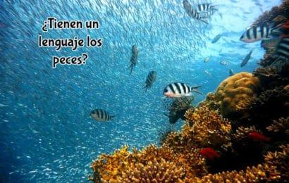 ¿Tienen un lenguaje los peces?