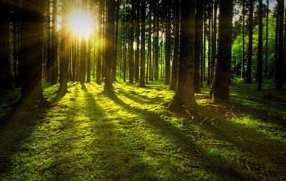 ¿Por qué son importantes los bosques?