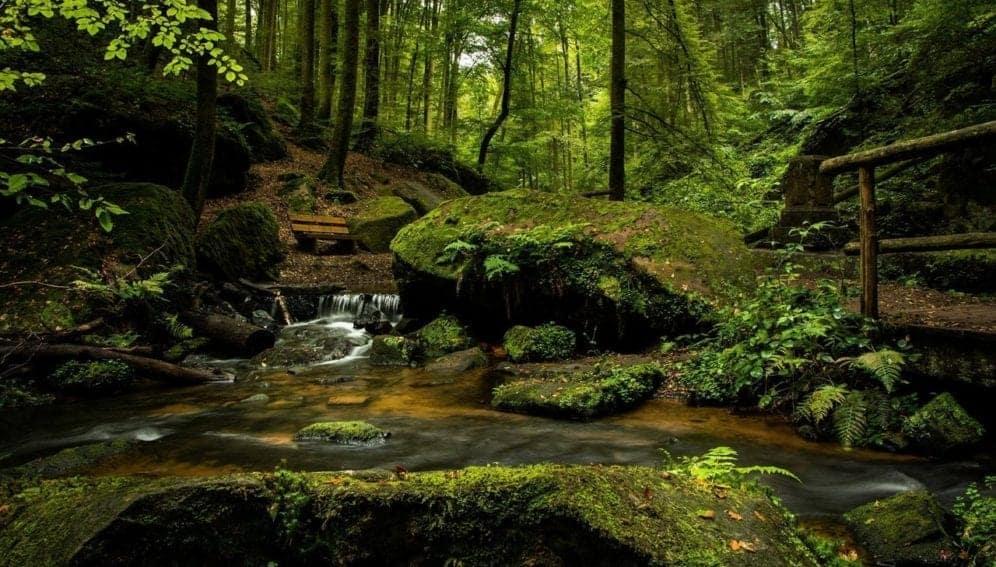 riachuelo en bosque